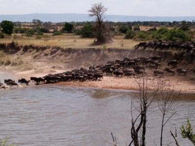 parque-nacional-serengueti