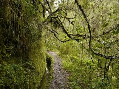 Vegetación en el camino de Caldeirão Verde