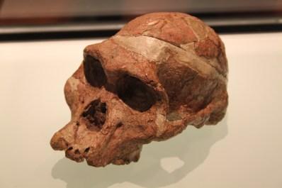 sitio-de-hominidos-fosiles-de-sudafrica