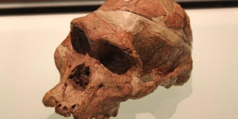 Sitios de homínidos fósiles de Sudáfrica