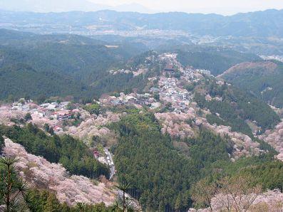 Cerezos en floración en la montaña de Yoshino