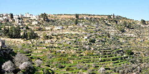 Palestina: tierra de olivares y viñas – Paisaje cultural del sur de Jerusalén, Battir