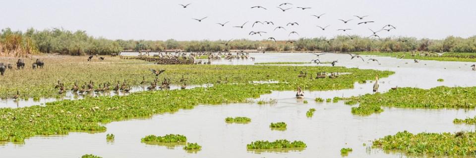 Santuario Nacional de Aves de Djudj