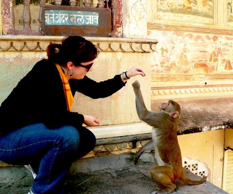Templo de los monos Jaipur India