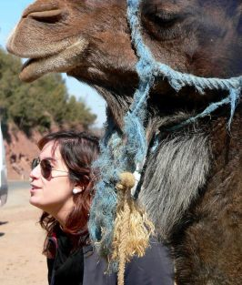 Camello Marrakech