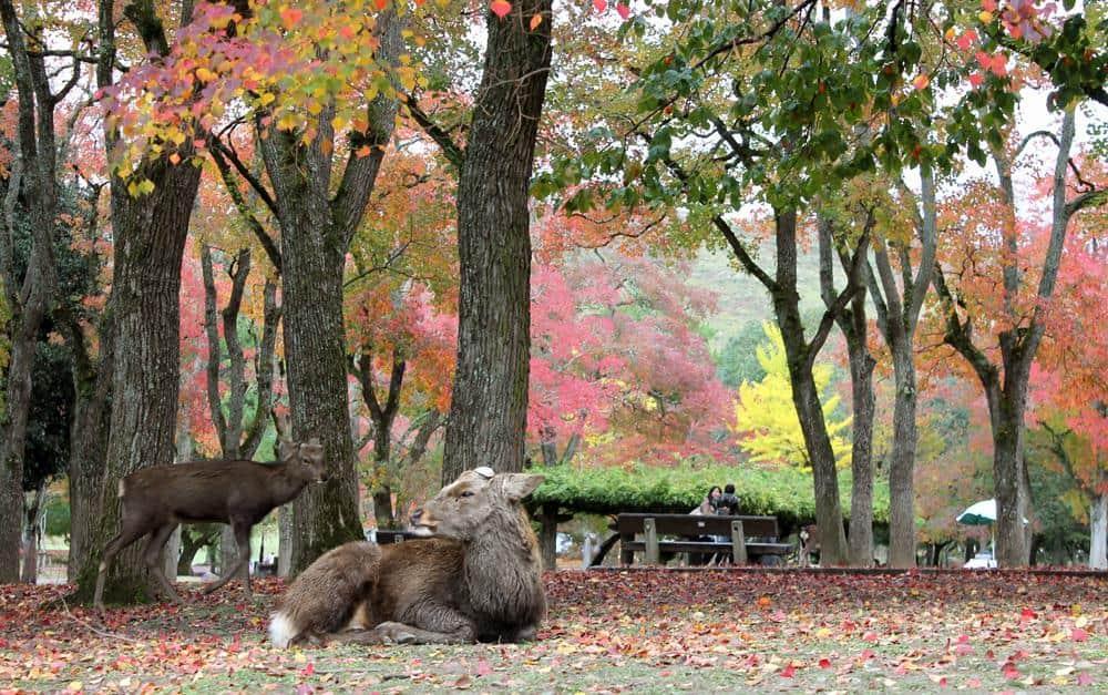 ciervos-nara-japon