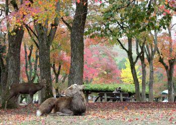 Excursión de un día a Nara