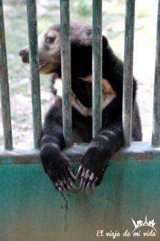 Wildlife Friends Foundation en Tailandia