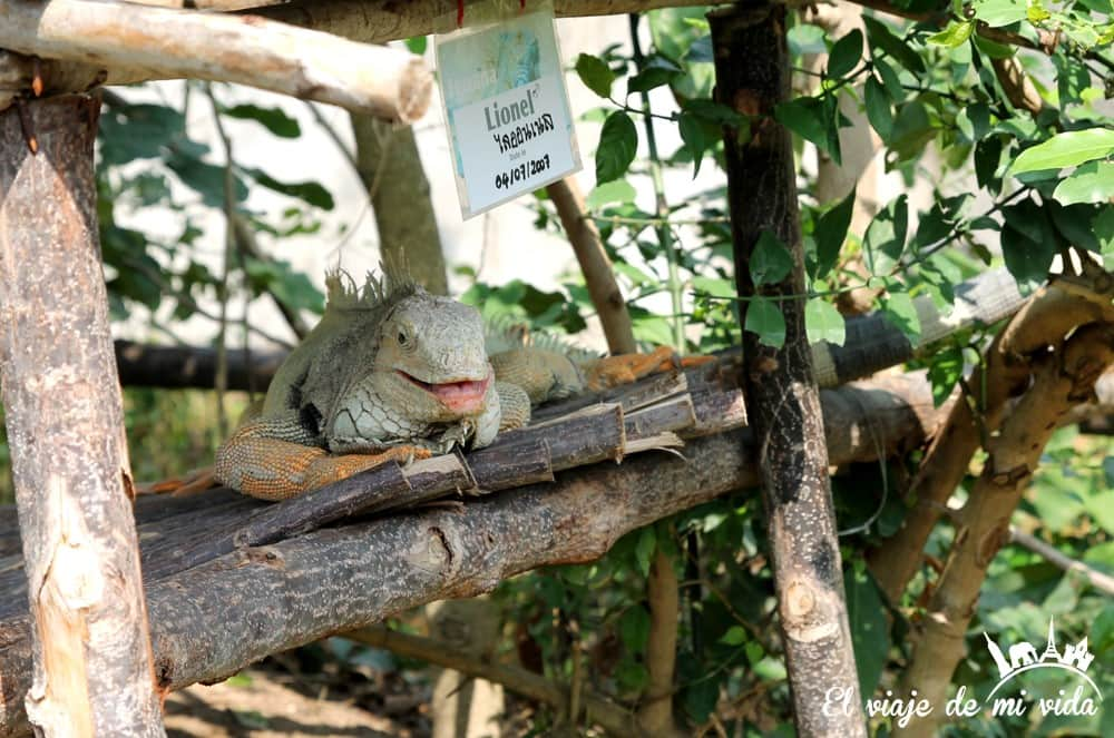 wildlife-friends-foundation-tailandia (4)