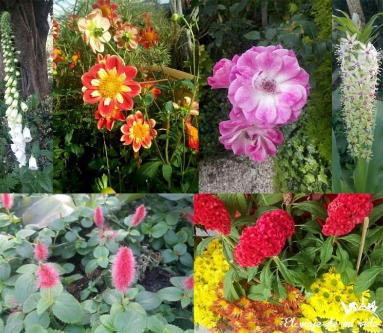 Flores de Gardens by the Bay en Singapur
