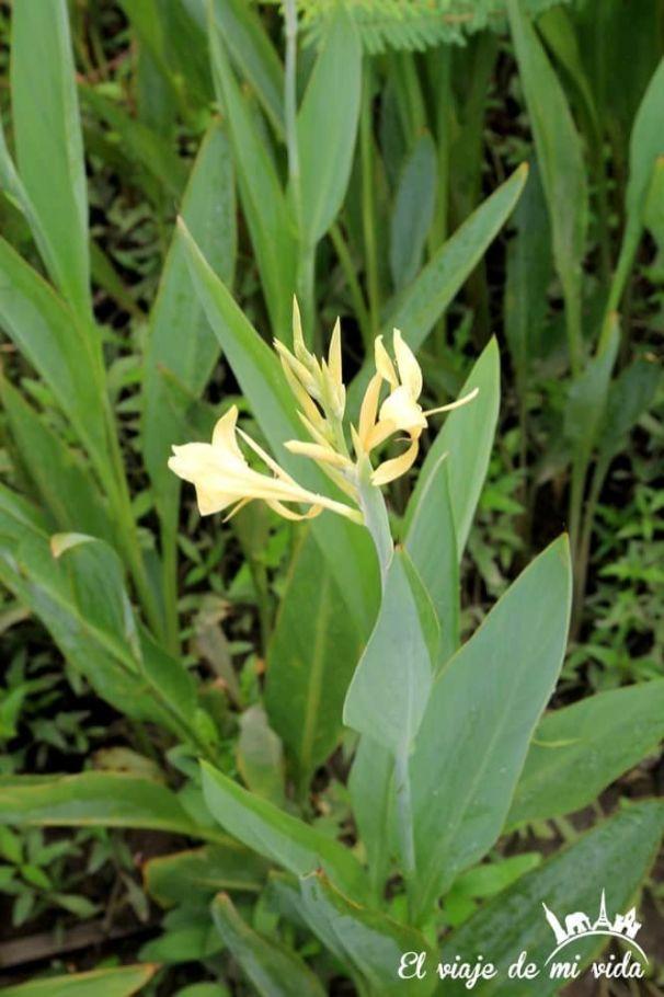 Flor de la Isla de Santay en Guayaquil, Ecuador