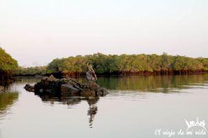 El amanecer en los manglares de Galápagos