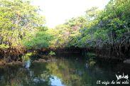 Black Cove Turtle
