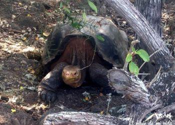 Presupuesto para viajar a Ecuador y a las Islas Galápagos