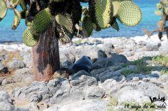 Bebé león marino descansando en Galápagos