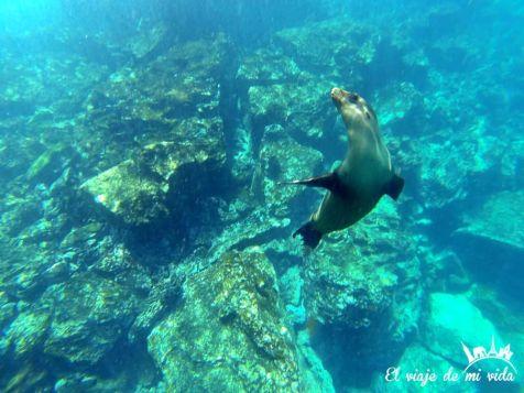 Snorkel en Galápagos
