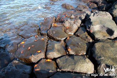 Cangrejos en Galápagos
