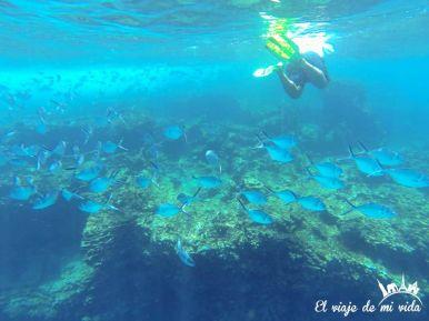 Snorkel en San Cristóbal