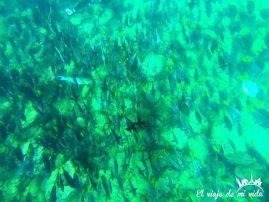 Miles de peces