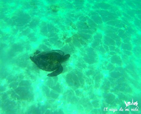 Tortugas marinas en Galápagos