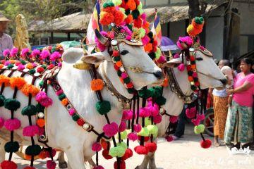 Celebraciones en Myanmar