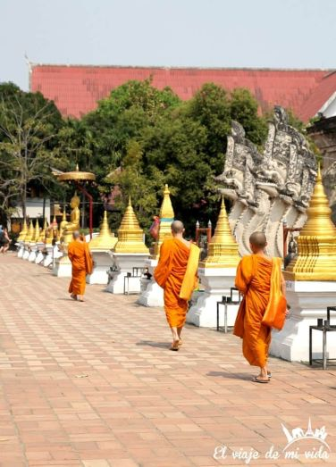Monjes budistas por doquier