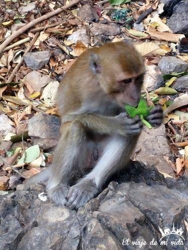 Monos de Tiger Cave Temple en Krabi, Tailandia