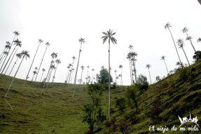 El Valle del Cócora y sus palmeras, Colombia