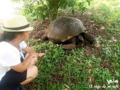 Tortugas en la Finca el Chato, Galápagos