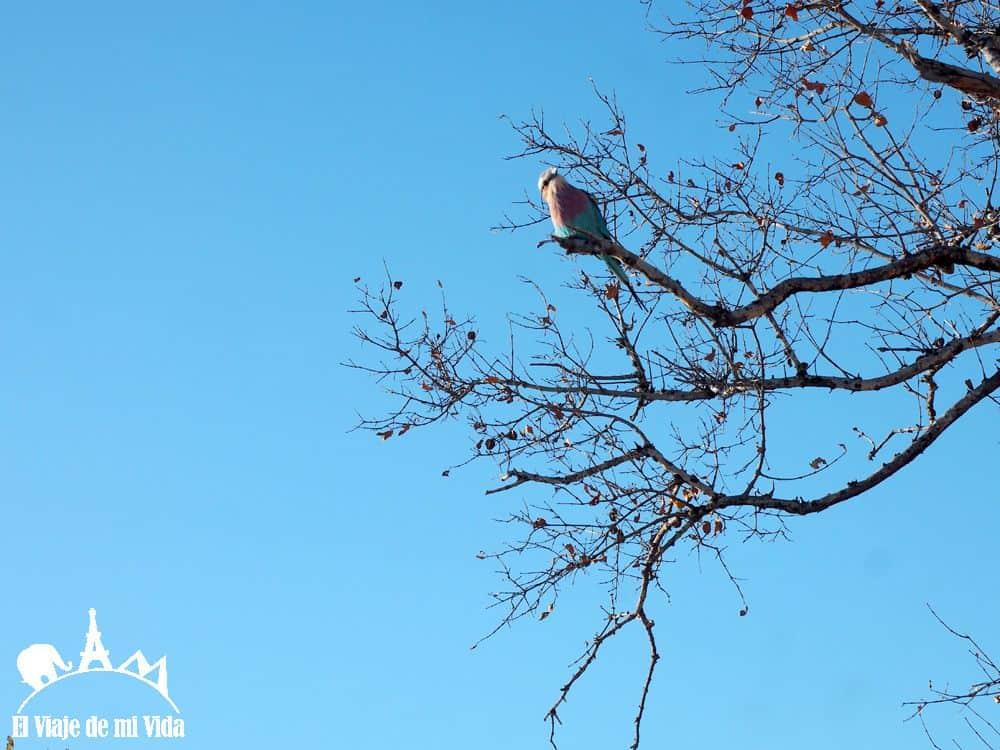 Aves del parque Kruger