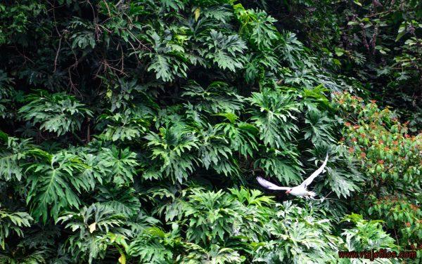 08 Viajefilos en Panama. Isla de Bocas 09