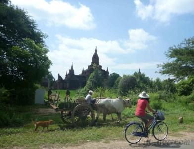 Bagan 44