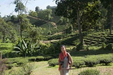 05 Trekking Chiang Rai 17