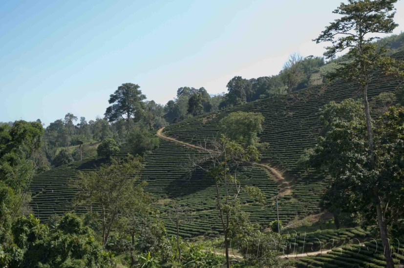 05 Trekking Chiang Rai 19