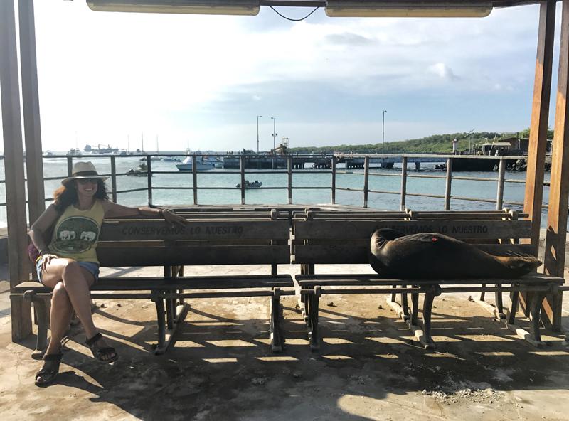 Los graciosos compañeros de paseo en San Cristóbal, los leones marinos de Galápagos