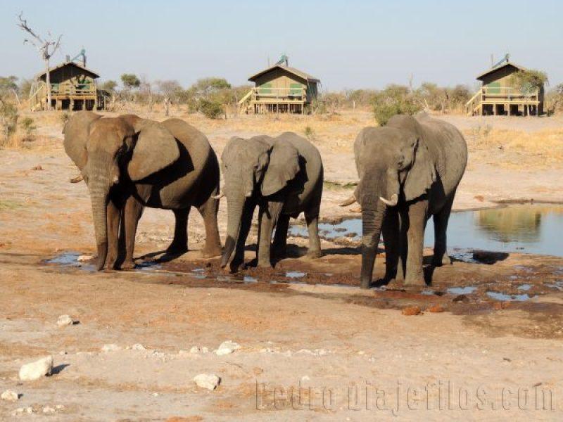 Elefantes en el campamento de Elephant Sands
