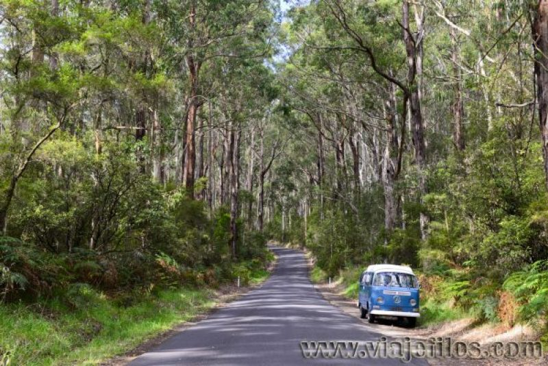 Cape Oatway National Park en la GOR, recorriendo Australia en caravana