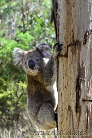 Viajefilos en Australia. GOR  092