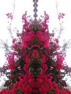 Geometría vegetal. Fotos creativas.