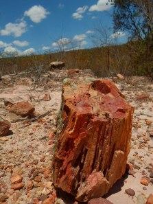 Floresta Petrificada - Missão Velha - Chapada do Araripe - Ceará (6)