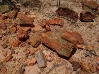 Floresta Petrificada - Missão Velha - Chapada do Araripe - Ceará (7)