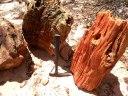 Floresta Petrificada - Missão Velha - Chapada do Araripe - Ceará (8)