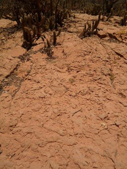 Iconofósseis: registros de insetos que passaram pelo chão há milhões de anos