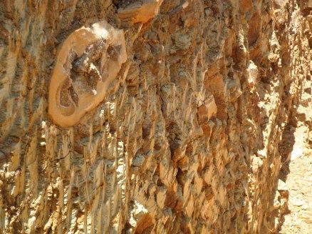 Fóssil encravado em uma parede da escavação