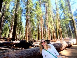 Marisposa Grove - Yosemite National Park