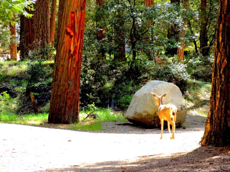 Bambi - Yosemite Valley