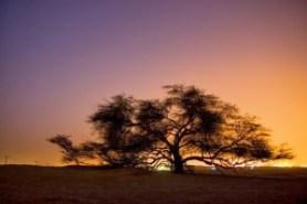 Tree of Life - A árvore da vida - Arvores Famosas