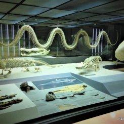 Galeria dos Repteis no Museu de Nova York de História natural