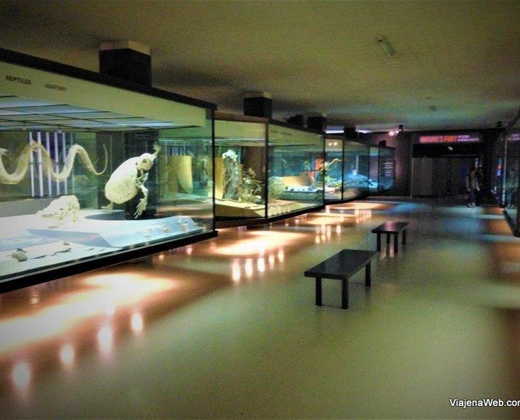 Galeria dos anfíbios no Museu de História Natural de Nova York