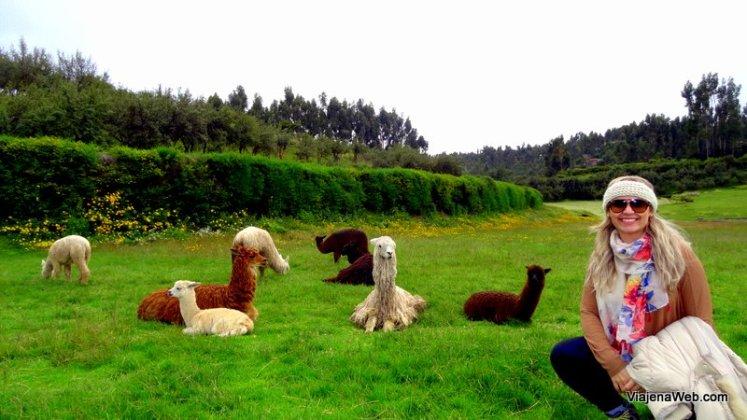 O que fazer em Cusco - Lhamas na Fortaleza de Sacsayhuaman
